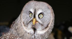 Geek Shock #246 - The Sharting Owl