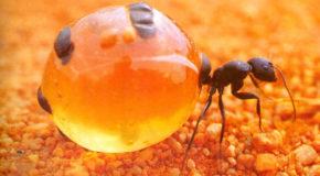 Geek Shock #333 - Shredding the Ant's Butt